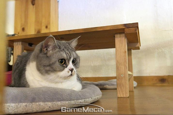 고양이가 가득한 카페, '커피볶는 고양이'