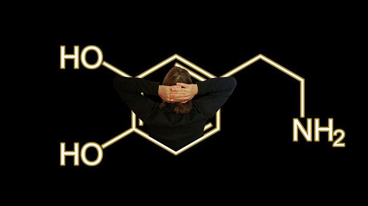 게임의 마약 논란에 많이 활용되는 도파민. 보상과 동기 유발에 관여하는 물질이다